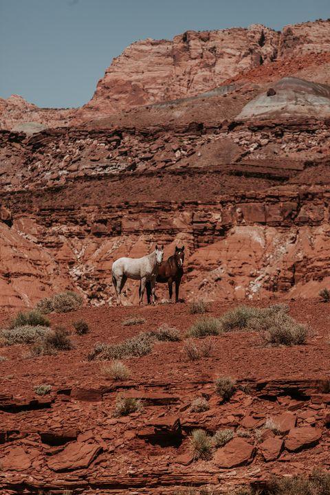 Page Arizona Wild Mustangs - Anita McLeod Photography