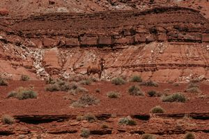 Wild Horse Page Arizona