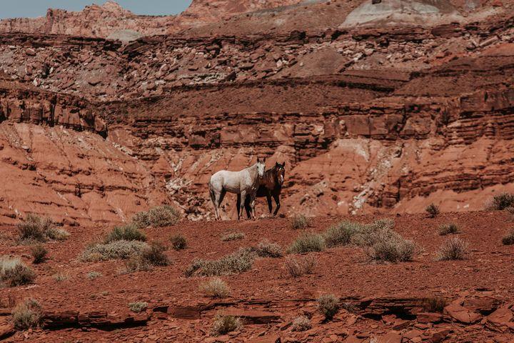 Wild Mustangs Page Arizona - Anita McLeod Photography