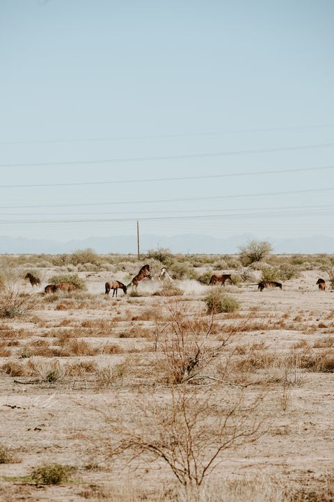 Rearing up in the desert - Anita McLeod Photography