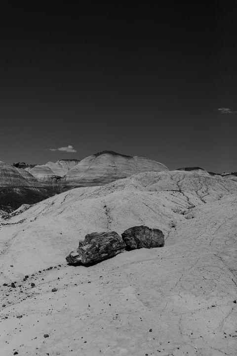 Black and White Petrified Wood - Anita McLeod Photography