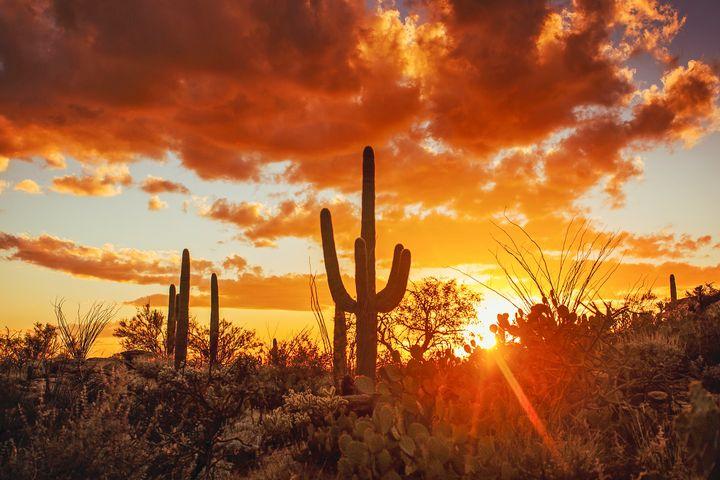 Sunset at Saguaro National Monument - Anita McLeod Photography