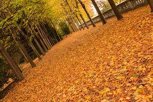 tree-lined avenue with leaves
