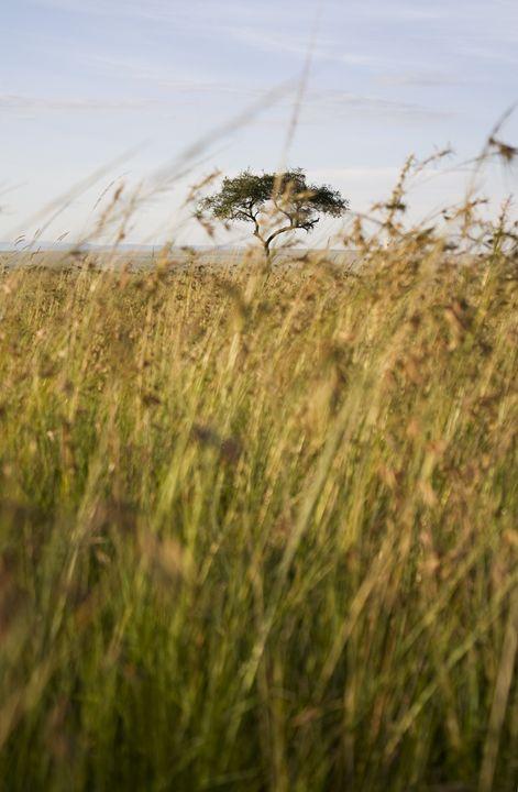 Maasai Mara - Morgan Beard