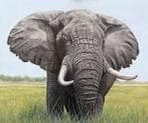 Last true giant