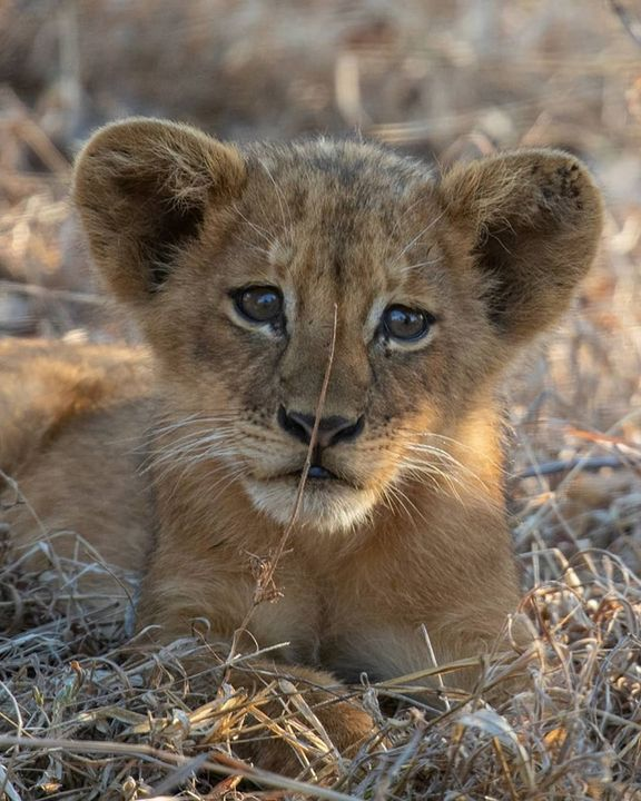 HEIR TO THE THRONE - TRUE AFRICAN ADVENTURES