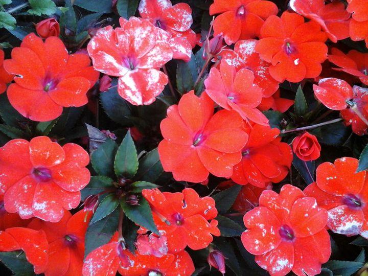 Colorful flowers - GI ART