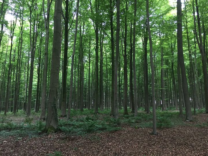 Forest - Giart