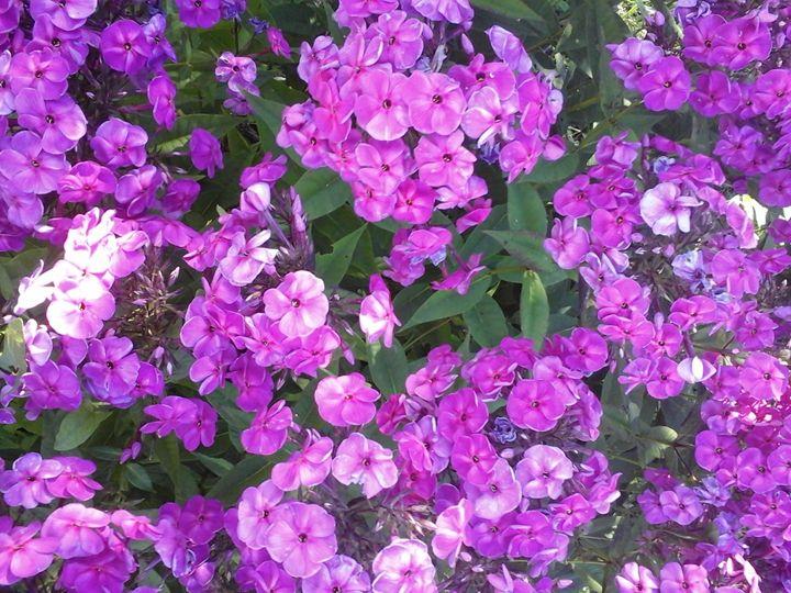 Flowers - GI ART