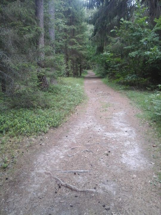 Road in the Forest - Giart
