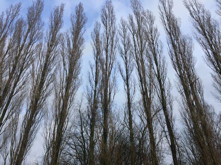Winter trees - Giart