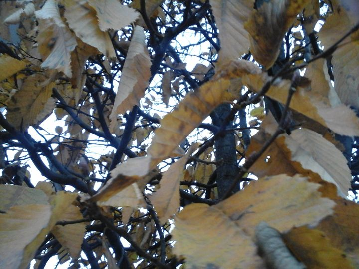 Autumn - Giart