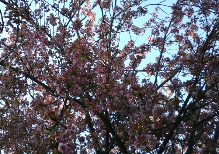 Flowering - Giart