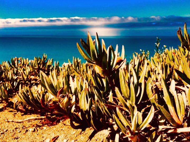 California Aloes Along The Shore - Sara Anne Love