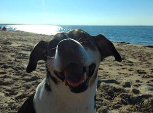 Canine Beach - Ben Salomonsky Photographic Designs