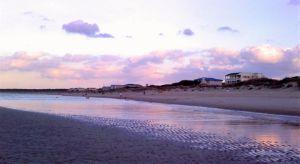 Sandbar Beauty