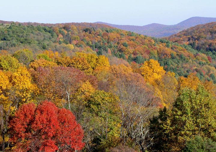 The Colors of Autumn - Ben Salomonsky Photographic Designs