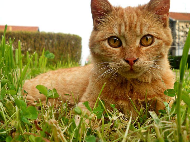Cat - ARTchibald