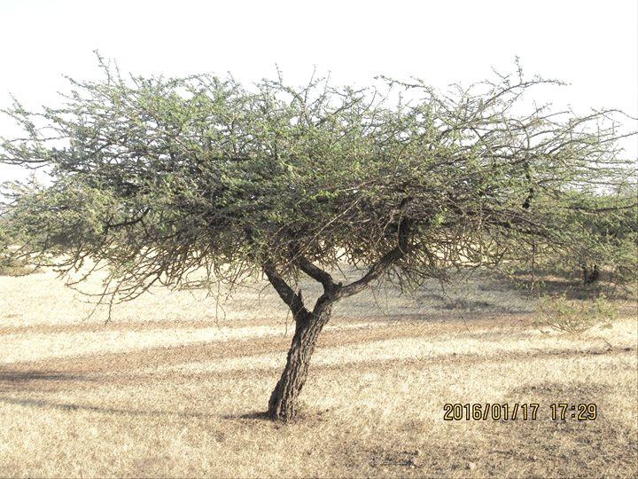NATURE - mahi