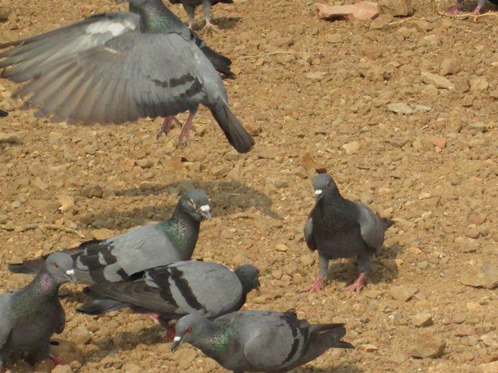 birds - mahi