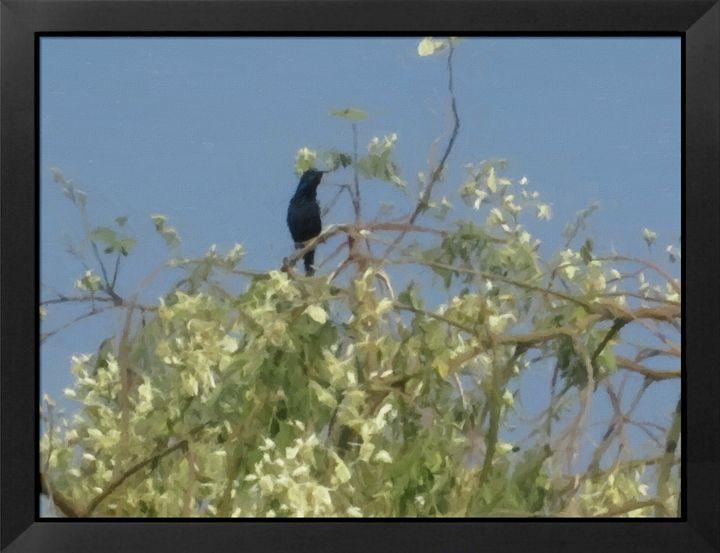 BIRD - mahi