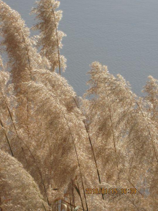 natural grass at river bank - mahi