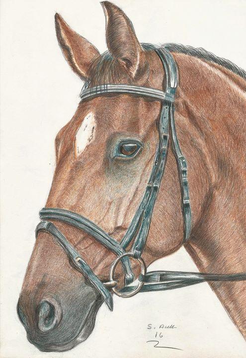 Horse - Steve Allison Art
