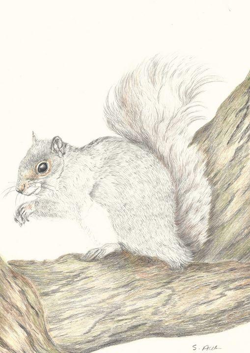 Grey Squirrel - Steve Allison Art
