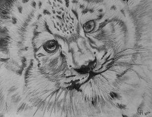 Snow cub