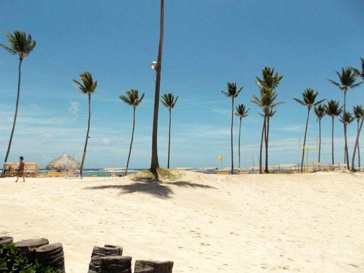 Beach Palm Trees - Photo Speaks Photography
