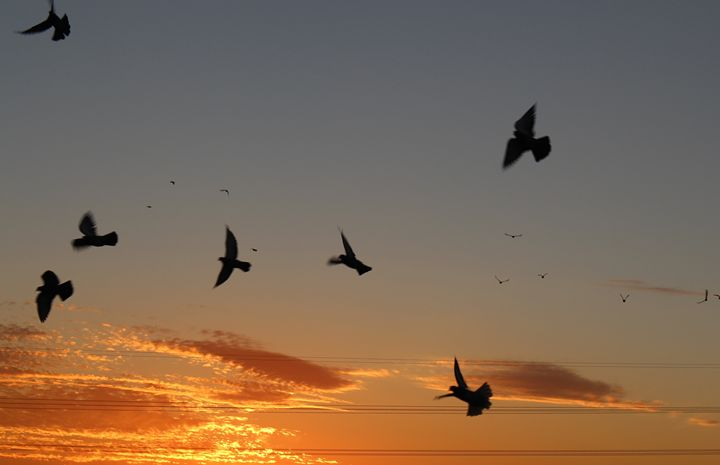 Birds flying high - Photo Speaks Photography