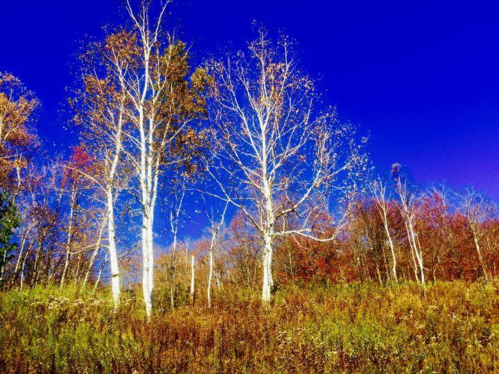 Birchblu - PeaceAndSerenityArt