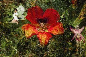"""Flower Fairies"" - Tiffany Luptak Photography"