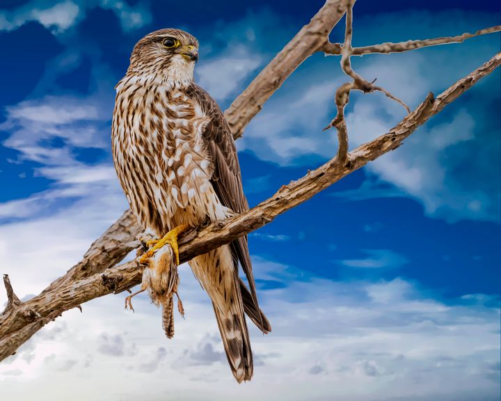Catch Of The Day - Nature Photography by Richard Higgins