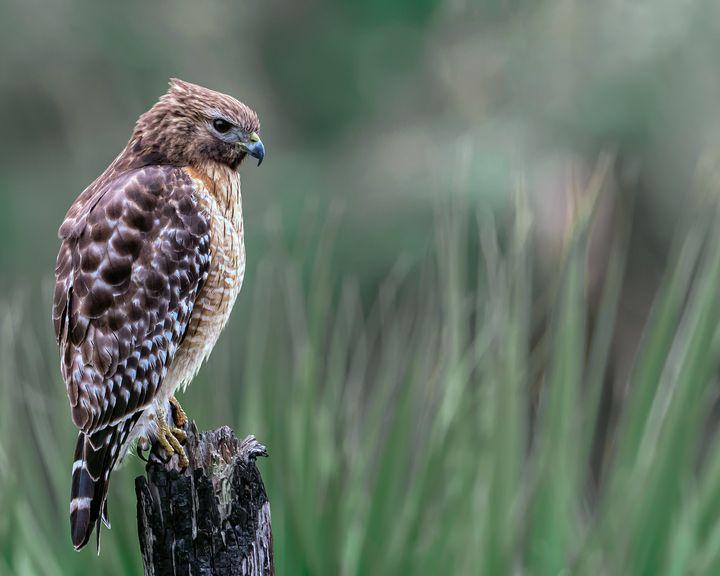 Keen Eye - Nature Photography by Richard Higgins