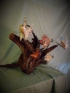 Lionfish on Driftwood