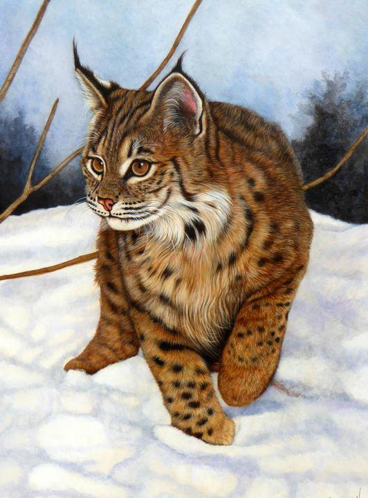 Bobcat in the Snow - Jacquie Vaux Art
