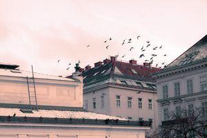 Flying Pigeon in Vintage Style