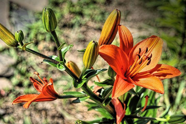 Orange I ENUFF Fer U?!?! - BOB~L~HEAD ART