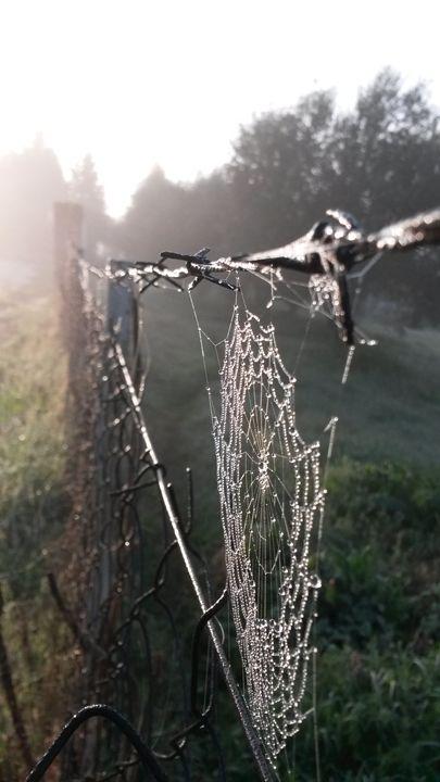 Fresh Morning - Dimitrios