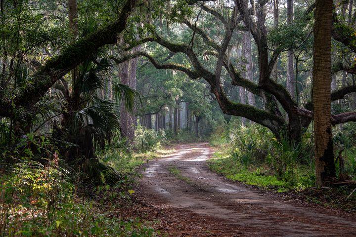 Maritime Forest at Botany Bay - Doug Wielfaert Photography