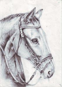 Pencil art,horse portrait