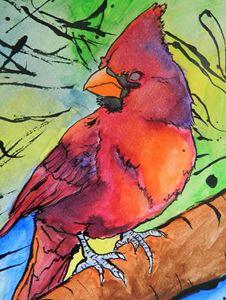 Cardinal in Contrast