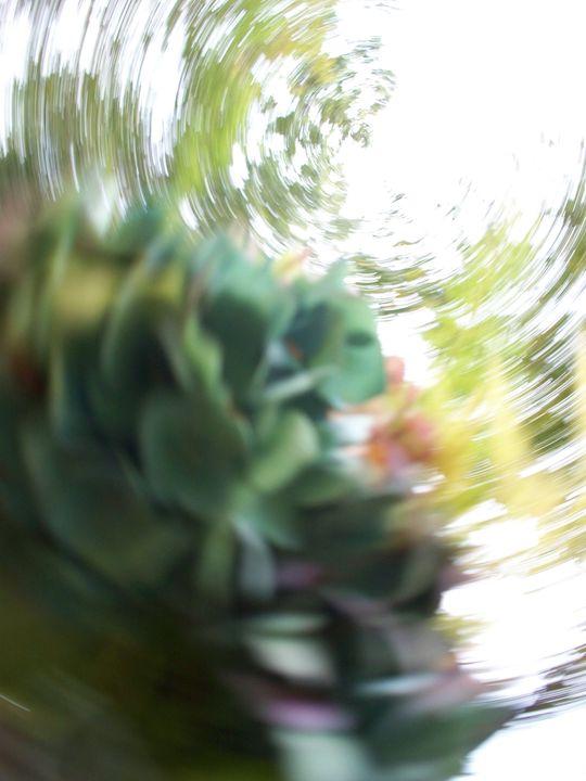 Dizzy - Silva Nature Photography