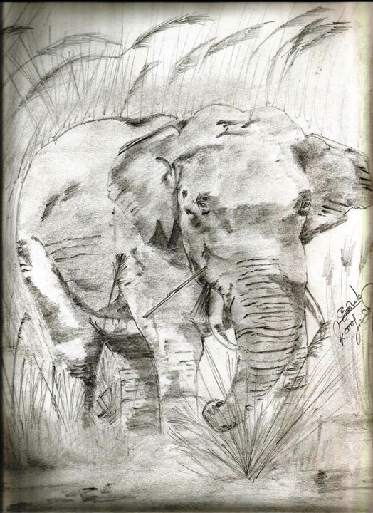 Indian Elephant - faizer pencil arts