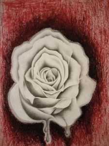 Graphite and oil pastels Rose