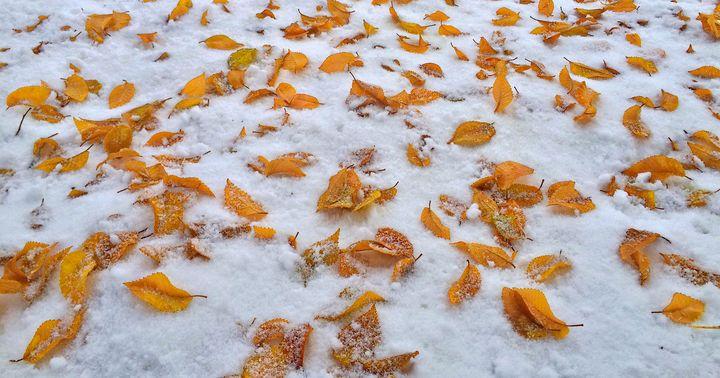 Autumn leaves on snow - Saeid Foruzandeh