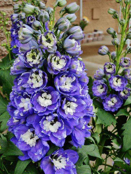 GLORIOUS DELPHINIUM - VLeeORIGINALS