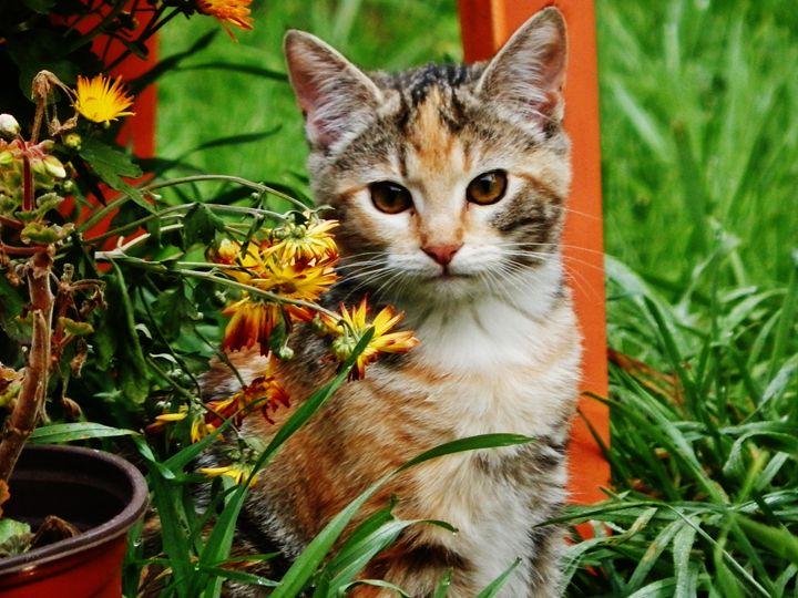 LILY GARDEN CAT - VLeeORIGINALS
