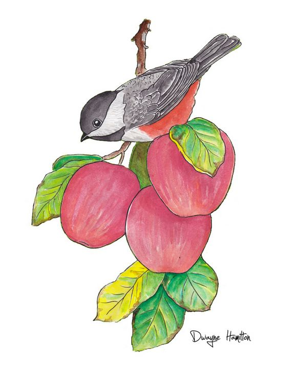 Bird and Apples - Dwayne Hamilton Artist